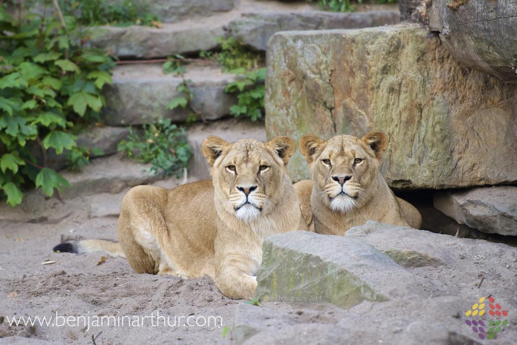 Artis Zoo Photos